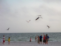 This was picture was taken in St Petersburg Beach at Long Key Beach Resort of children feeding the gulls along the shoreline